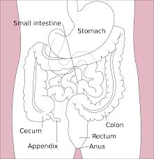 Diagram representing the colon in the body